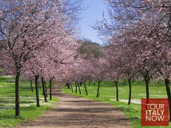 villa-pamphili-rome-italy-plumtrees