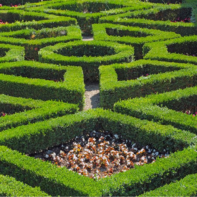 boboli-gardens-florence-italy-hedge-maze