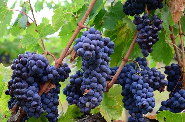Grape Varietals