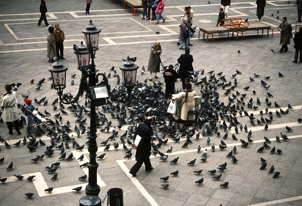 Piazza_San_Marco_venice_pigeons