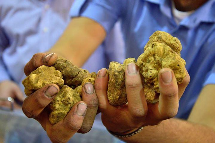 alba truffle festival white truffles